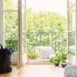 5 najpopularniejszych kwiatów balkonowych